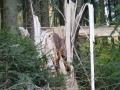 djk-wanderung-2012_59
